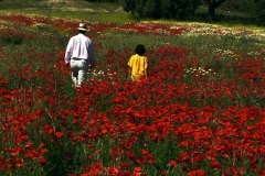 en_tu_ausencia_paco_and_pablo_flower_fields