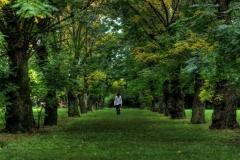 vuelve_renzo_trees